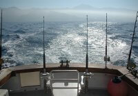 Reasons Why New Zealand Has the World's Finest Sports Fishing