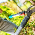 The Most Common Tree Cutting/Felling Related Accidents