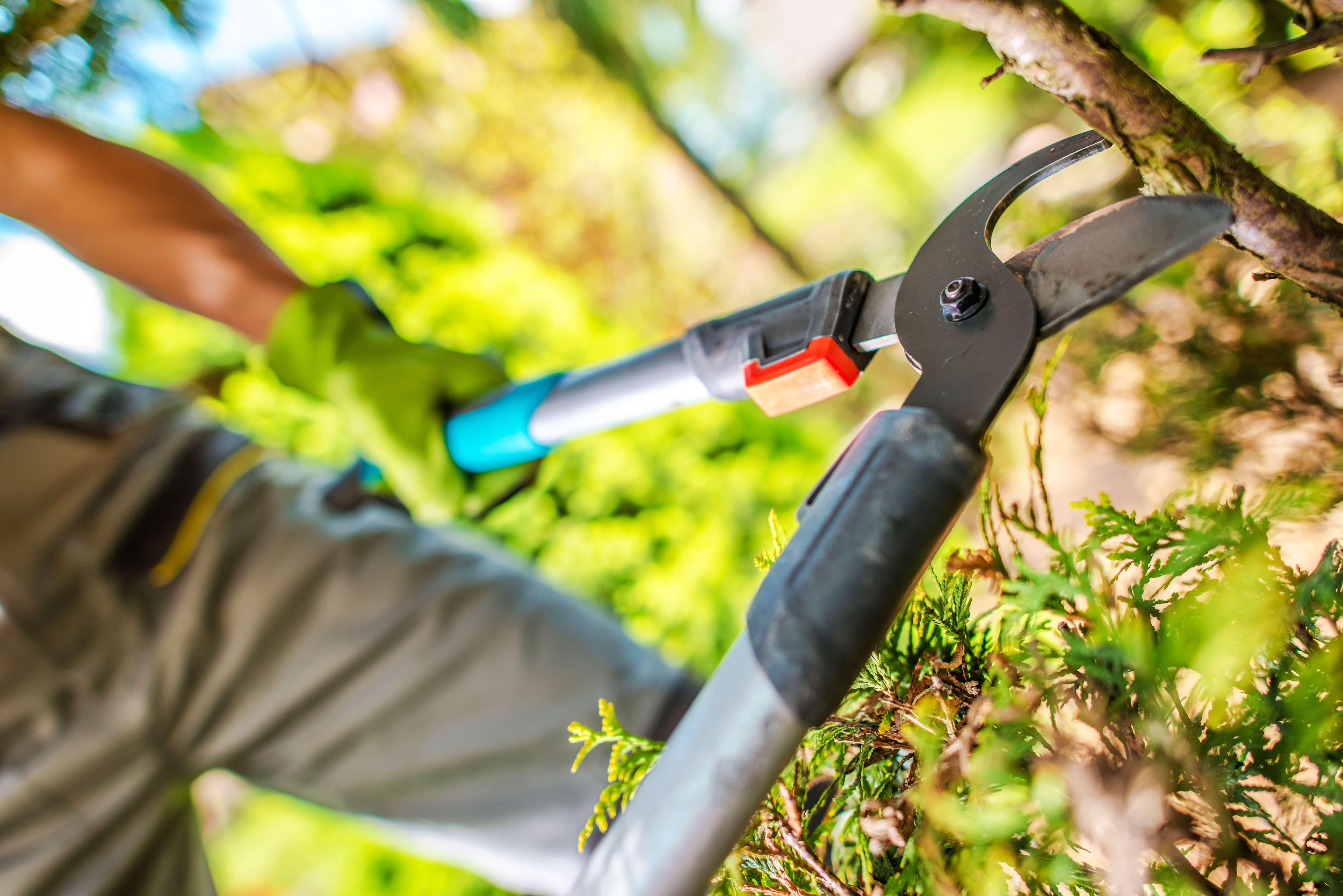 garden-tree-branches-cut